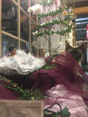 siamese cat in netting